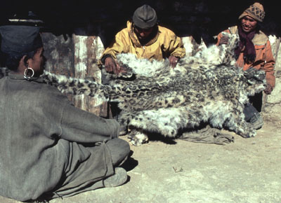snow leopard pelt for sale in a Langu market