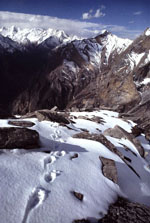 snow leopard tracks on top of the world