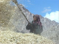village woman winnowing with a wooden rake