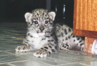 Asha at a few weeks old