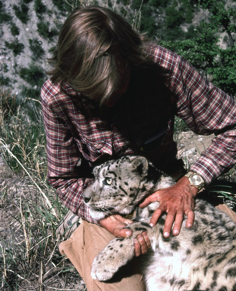 Rodney with sedated snow leopard lying over his lap