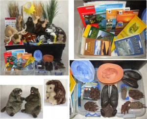 Pictures showing contents of trunk: various animal puppets, footprint molds, guide books