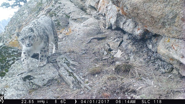 Ghulam's trail camera photo resized