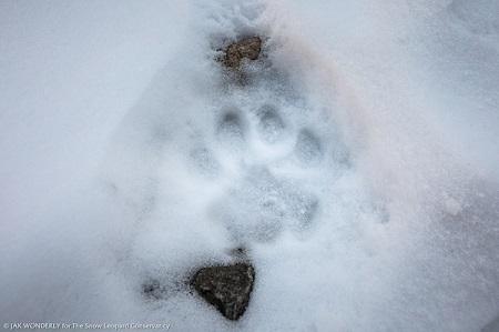 Jak Wonderly snow leopard pugmark 2018