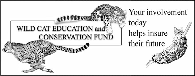 Wild Cat Education Logo