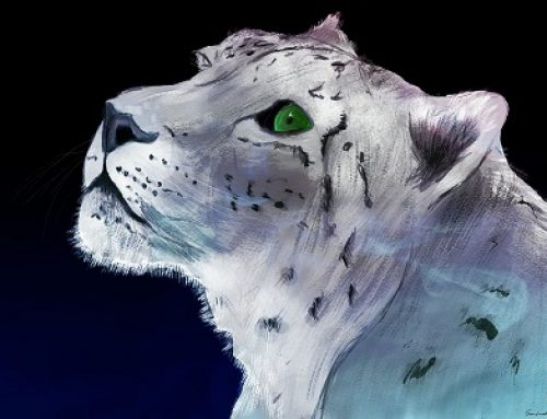 Winners of the Art & Poetry Contest – Capture the Spirit of the Snow Leopard
