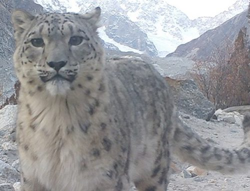 Celebrating 15-Years Partnership With Project Snow Leopard in Pakistan